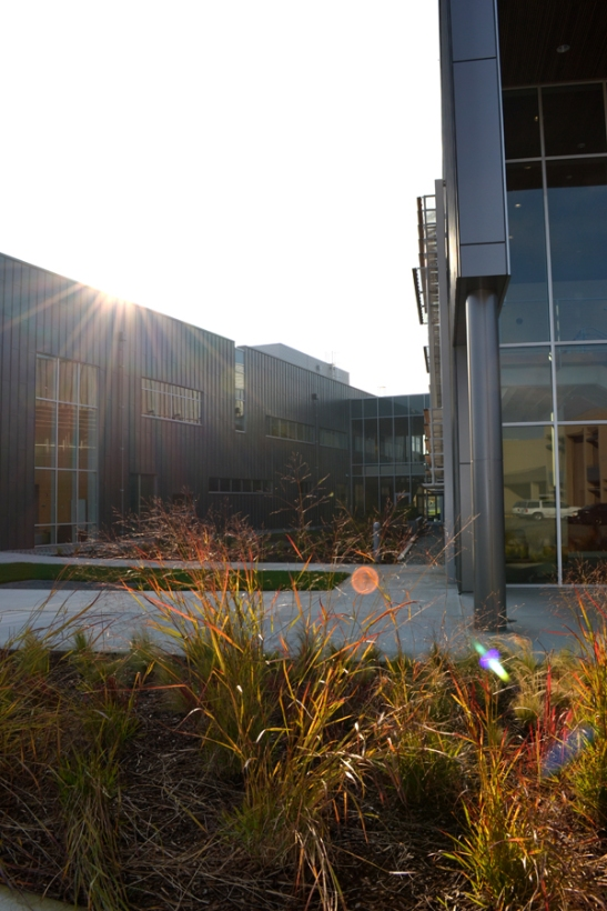 Sunset View of the Courtyard With a Glimpse of the Ipe Trimmed Sunshades.